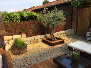Fest gepflanzter Olivenbaum mit integrierten Winterschutz